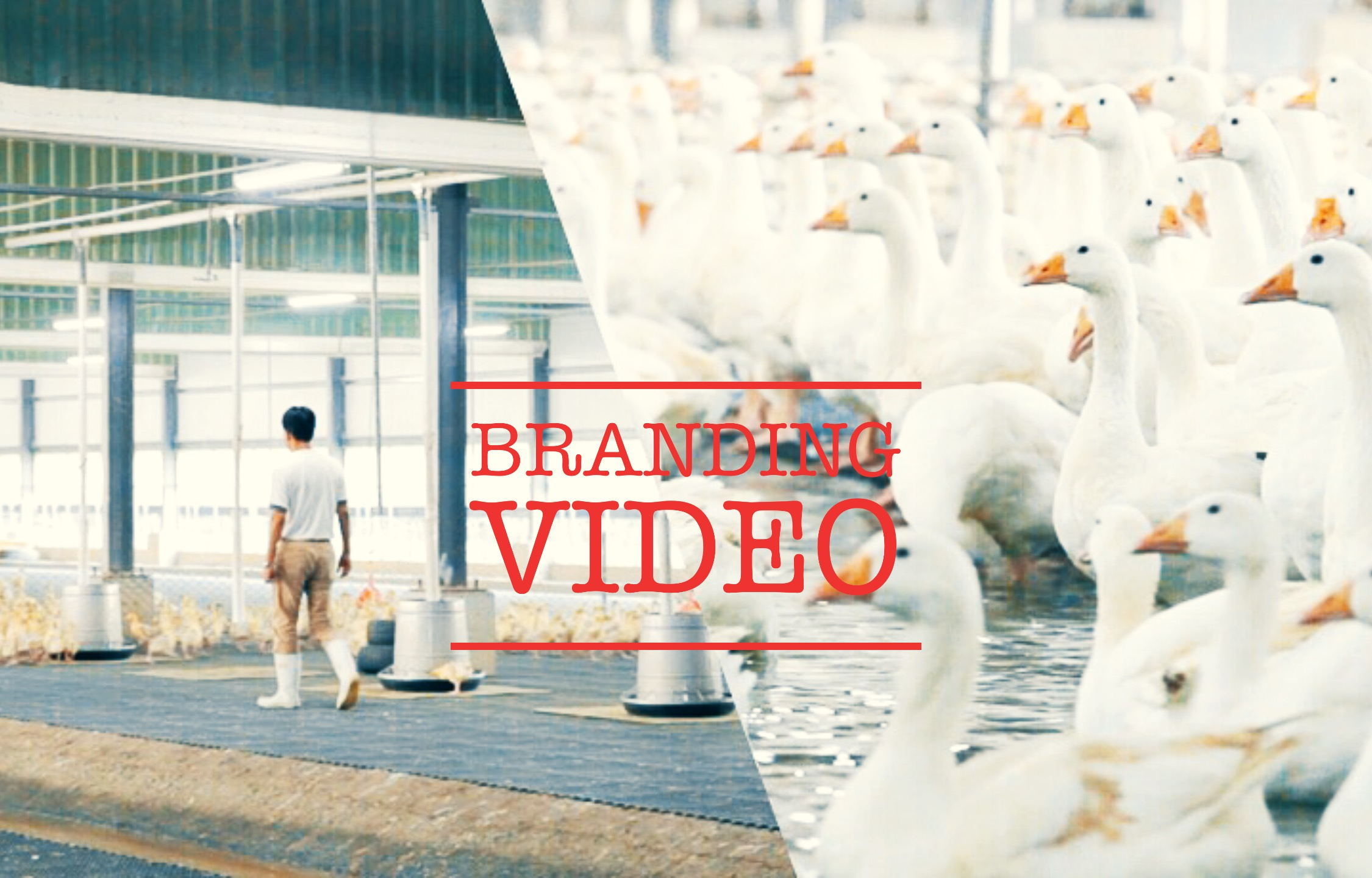 嘉義大林鵝王,靠紀錄片打海外開知名度、行銷國際!